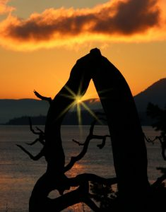 Sunset sparkles against driftwood, Pender Island BC