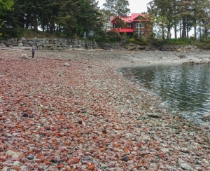 Broken red bricks cover Bricky Bay, Pender Island.