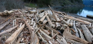 Logs line the high-tide mark of a cove on Pender Island.